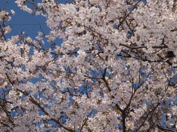 20120331升形の桜E-520_0009.jpg