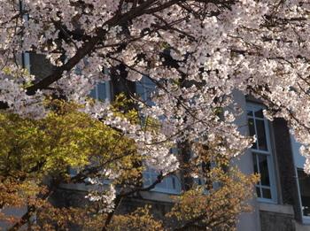 20120331升形の桜E-520_0012.jpg
